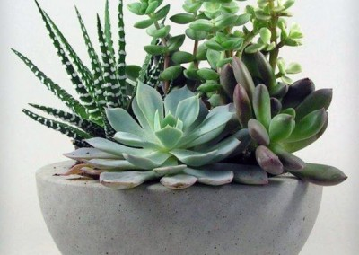 elegant succulents arrangement